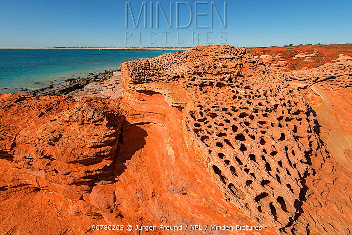 Honeycomb formation on the red rocks caused by erosion, Gantheaume Point, Broome, Western Australia. July 2016.