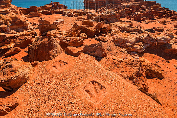 Replica of dinosaur footprints on Gantheaume Point. The real dinosaur footprints preserved in reef rock can be seen at very low tide at the bottom of the cliff, Kimberley, Western Australia. July 2016.