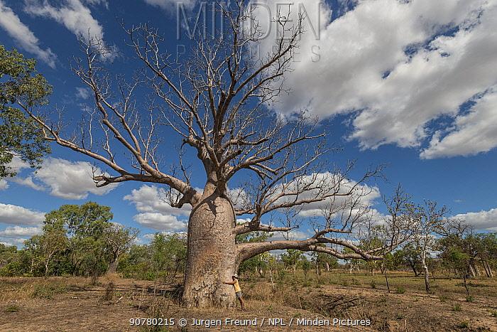 Woman hugging a Boab tree / Australian baobab (Adansonia gregorii) Kimberley, Western Australia, Australia June 2016. Model released.