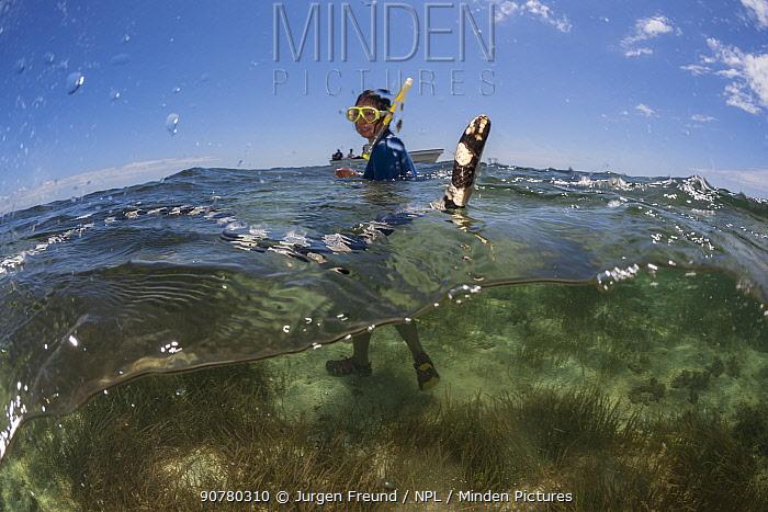 Woman swimming with Banded sea kraits (Laticauda colubrina) at low tide, Mali Island, Macuata Province, Fiji, South Pacific