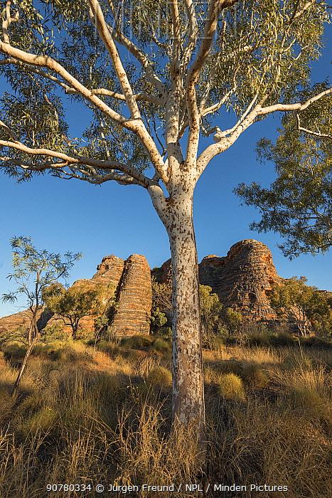 Bungle Bungle Range, beehive shaped karst sandstone formation formed by erosion, with dark lines formed by cyanobacteria. Purnululu National Park, UNESCO World Heritage Site, Kimberley, Western Australia. June 2016.