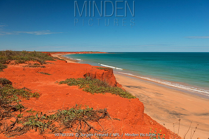 Vegetation in the red sand and sandstones by the coast. Dampier Peninsula,  Kimberley, Western Australia. July 2016.