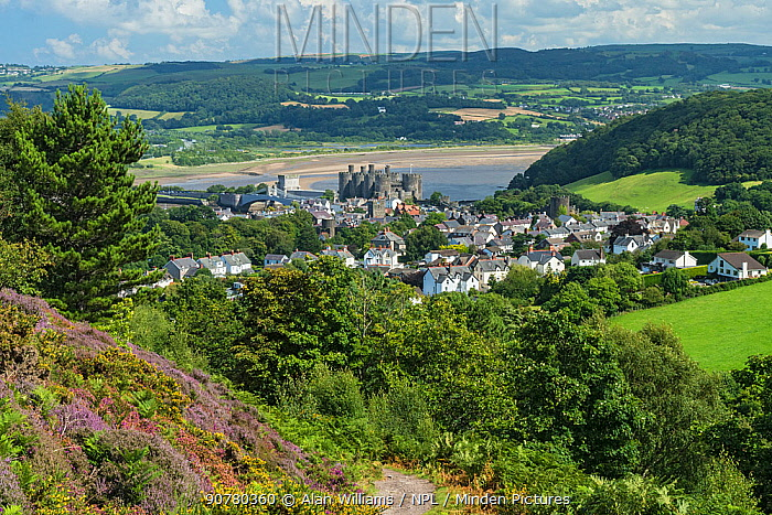 View of the town of Conwy from Conwy Mountain, showing the castle with the River Conwy behind, North Wales, UK, August 2017.