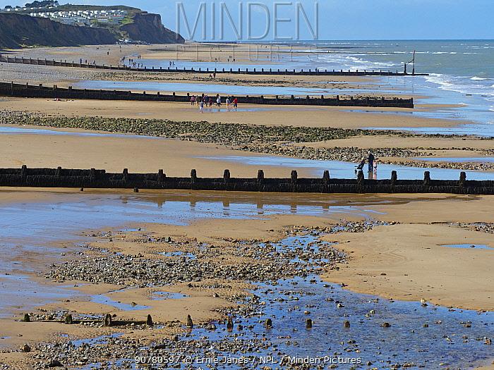 Cromer beach at  low tide with groynes, North Norfolk, England, UK, September