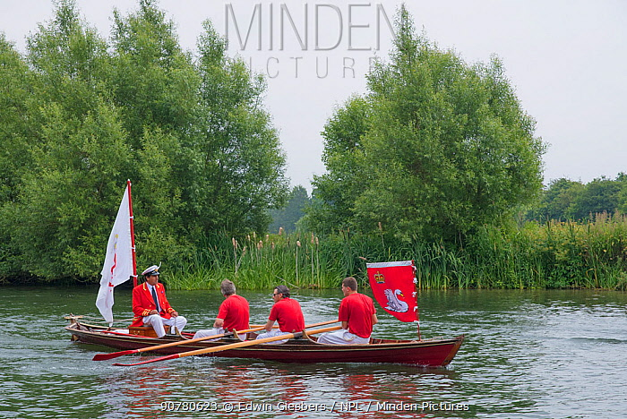 The Queen's Royal Swan Marker - David Barber and rowers in boat during Swan upping,  the annual census and marking of the Swans on the River Thames. England, UK, July 2016.