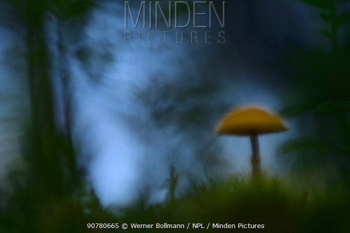 Abstract view of mushroom, Pilz, Lentiira, Finland, September.