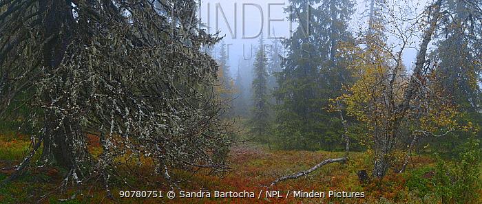 Autumn forest landscape in  Riisitunturi, Finland, September.
