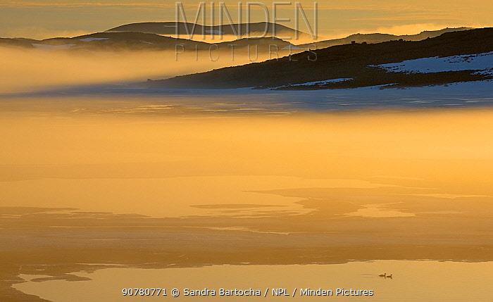 Red-breasted mergansers (Mergus serrator) on Tundra Lake  Nordkinn-Peninsula, Norway