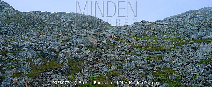 Hills in tundra landscape, Nordkinn Peninsula, Norway, June.