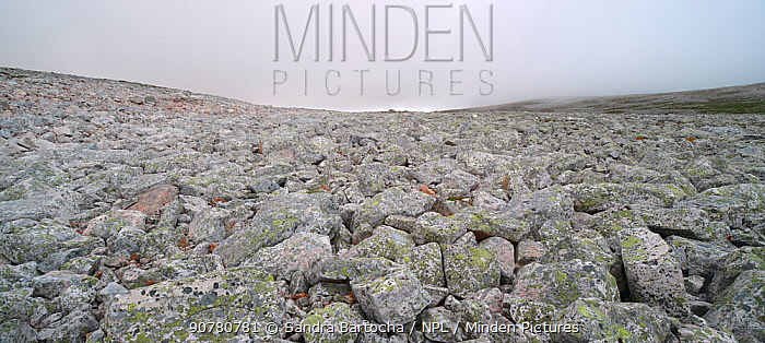 Boulder Field, Varanger Peninsula, Norway, June 2013.