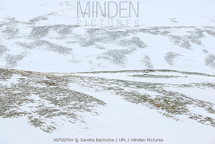 Landscape in  Adventdalen, Svalbard, Norway, March 2014.