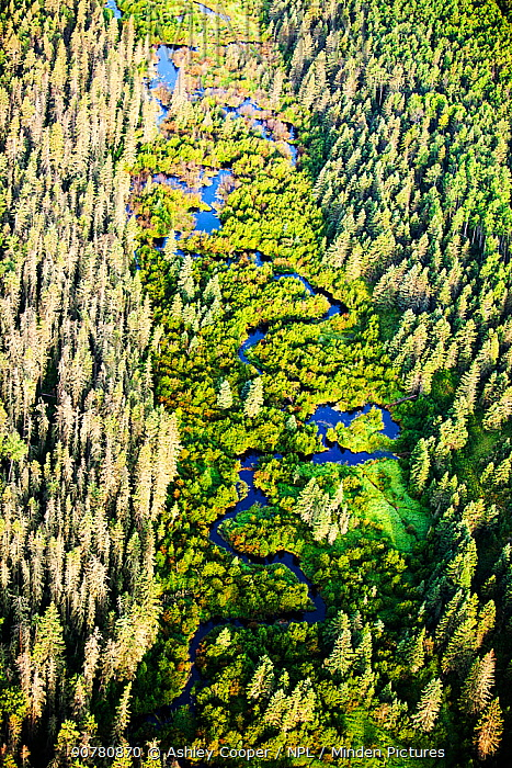 Boreal forest  near Fort McMurray, Northern Alberta, Canada, August 2012.