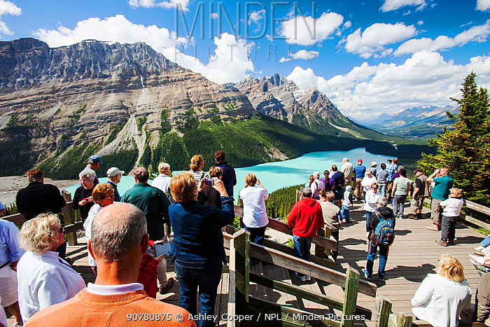 Tourists overlooking the Peyto Lake, Banff National Park, Canadian Rockies, Alberta, August 2012.