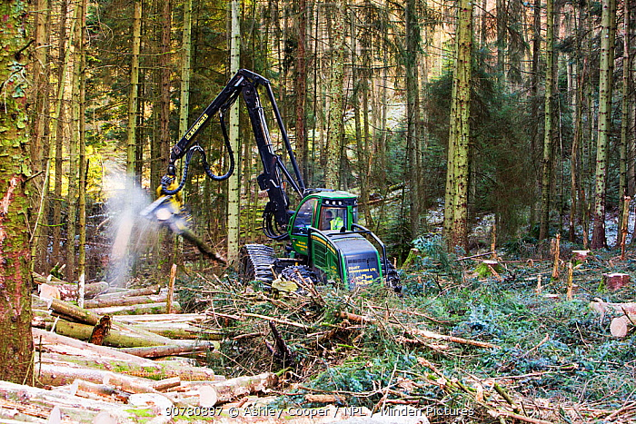 A forwarder, a specialist machine for cutting timber for biofuel  in Grizedale Forest, Lake District, England, UK