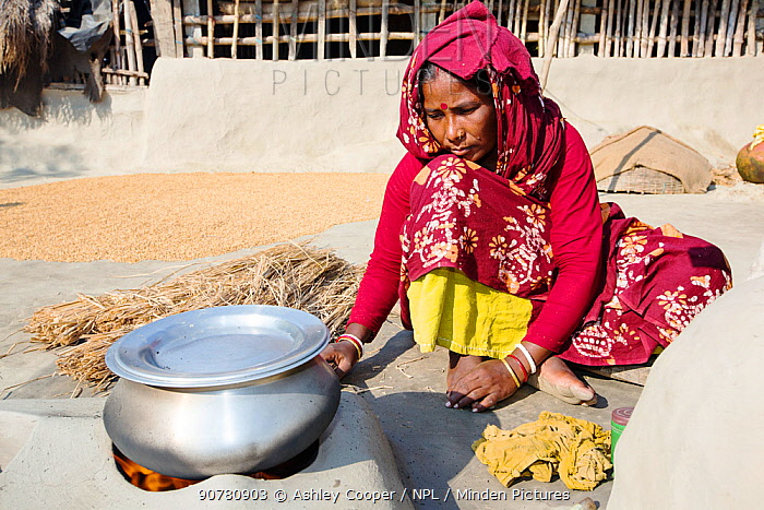 A woman subsistence farmer cooking on a traditional clay oven, using rice stalks as biofuel in the Sunderbans, Ganges Delta, India.  All parts of the rice crop are used, and the villager's life is very self sufficient, with a tiny carbon footprint.