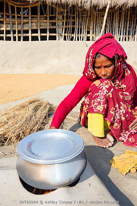 Woman subsistence farmer cooking on a traditional clay oven, using rice stalks as biofuel in the Sunderbans, Ganges Delta, India. December 2013.