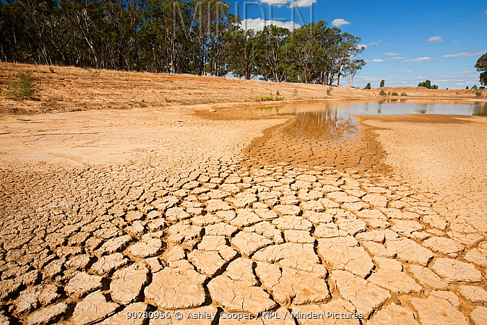 Farmer's watering hole on a farm almost dried up during drought which lasted from 1996-2011. Shepperton, Victoria, Australia.  February 2010.