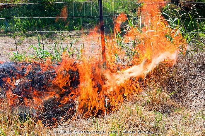 A roadside fire near Shepperton, Victoria, Australia, probably started by a motorist throwing a cigarette out of the window. This image was taken during the drought which 15 year drought which made bushfires more common, Victoria, Australia. February 2010.