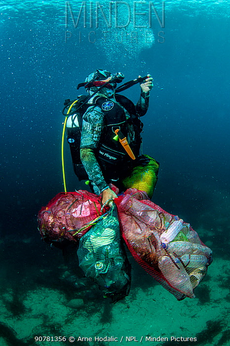Scuba diver removing plastic marine litter from the sea bed.  Mljet National Park, Mljet  Island, Croatia. May 2015.