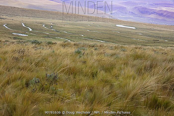 Wetland landscape in the paramo, Antisanilla Reserve, Ecuador. December 2016.
