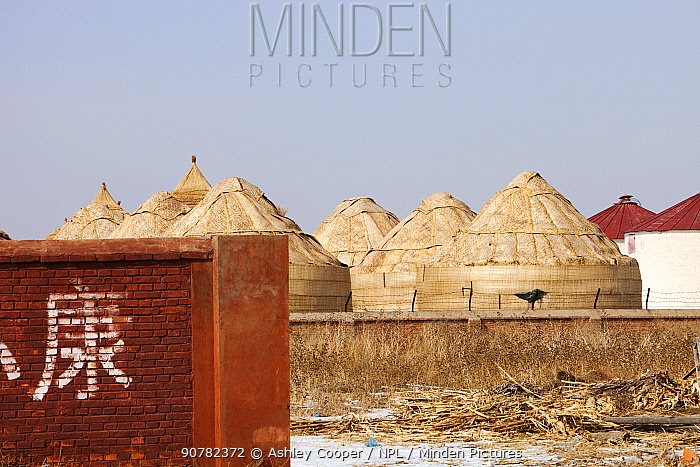 Food storage depots in Heilongjiang Province, during drought which caused food shortages. Northern China, March 2009.
