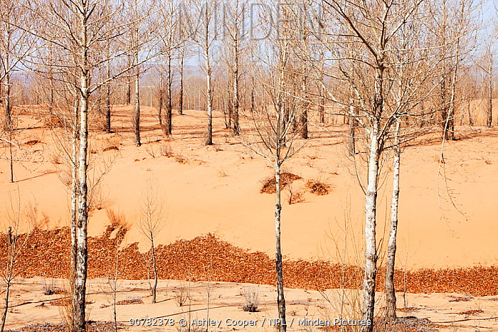 Desertification in Shanxi Province during severe drought, China. March 2009