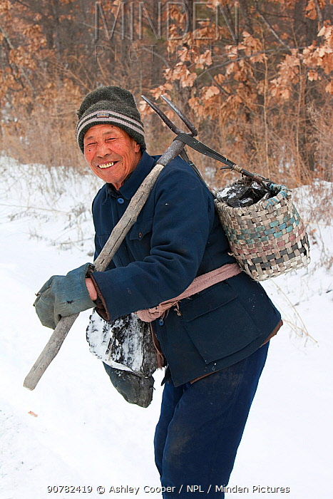 Chinese man collects coal that has fallen from lorries taking coal from an open cast coal mine to power plants near Heihe on the Chinese Russian border