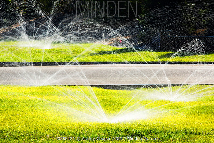 Sprinklers watering lawns during the worst drought in living memory, Fresno, California, USA. October 2014.
