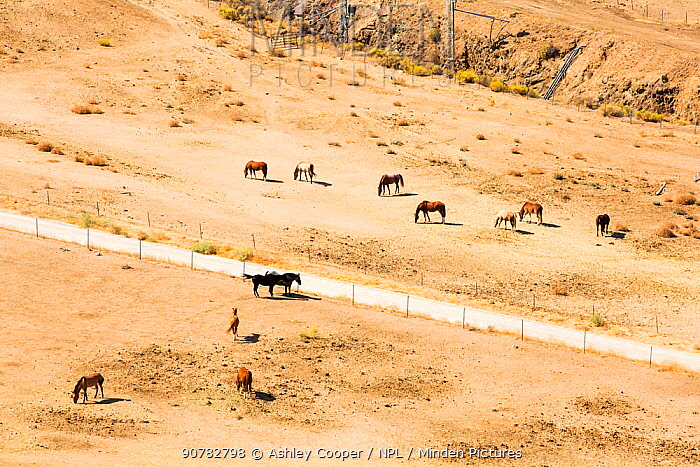Drought conditions near Tehachapi Pass, in California's four year long drought, USA. September 2014.