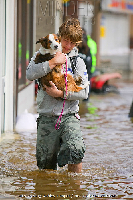Man with carrying small dog through floodwaters, Bentley, South Yorkshire, England, UK, 28th July 2007.
