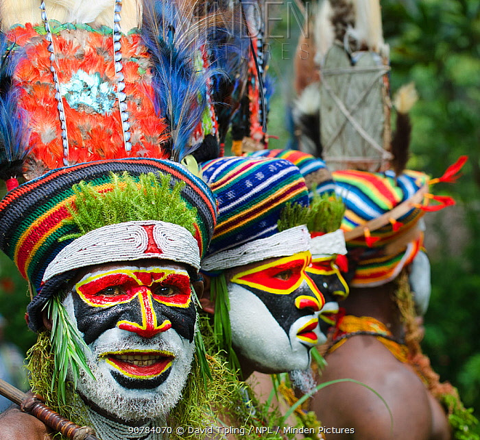 Tribal performers from the Anglimp District in Waghi Province, performing at a Sing-sing - Hagen Show Western Highlands, Papua New Guinea, August 2011