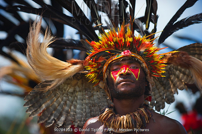 Performer from the Kupop Sing-sing group from Jiwaka Province, performng at Hagen Show at Mount Hagen, Papua New Guinea Wearing head dress of owl wings in head dress and sicklebill feathers. August 2011