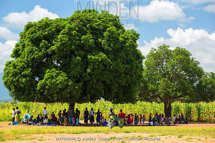 People displaced by the January 2015 floods sheltering from the heat of the sun under a tree in Baani refugee camp, Phalombe, Malawi.