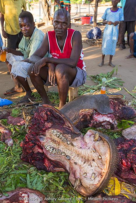 Malawians butchering a Hippopotamus (Hippopotamus amphibius) near Chikwawa, Malawi. March 2015.