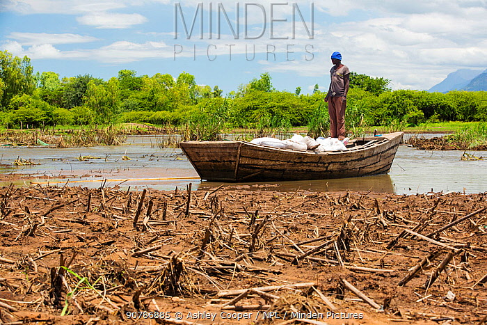 Boat ferrying food supplies across flooded farmland near Mulanje, with maize crops destroyed by the floods in the foreground. Malawi, March 2015.