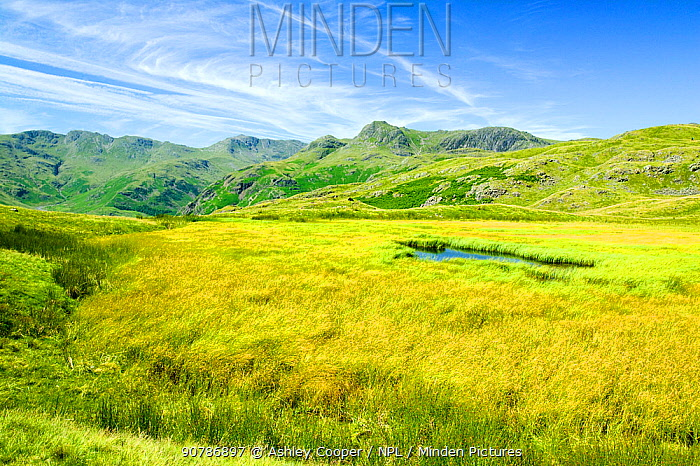 Upland tarn above the Langdale Valley, Lake District, England, UK, July.