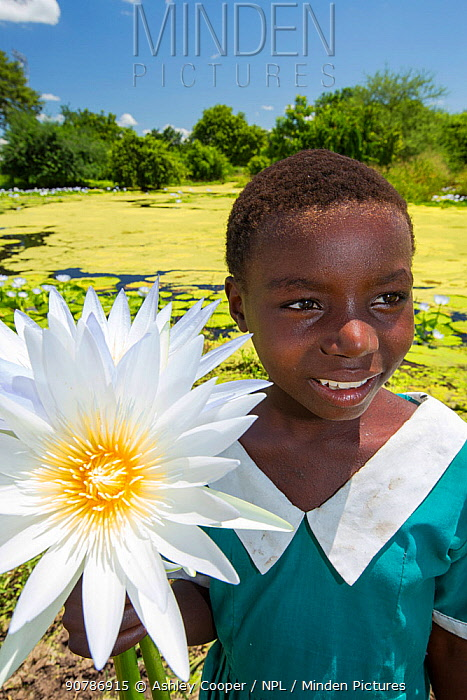 A girl picking Water lillies growing on marshland in the Shire valley near Bangula, Malawi, March 2015.