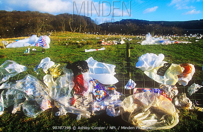 Plastic bags blown from a landfill site in Barrow in Furness, Cumbria, England,UK.