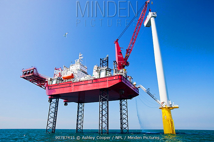 The Krakken, a jack up barge, constructing wind turbines of the Walney offshore wind farm, lifts a nacelle into place. Cumbria, England, UK. September 2011
