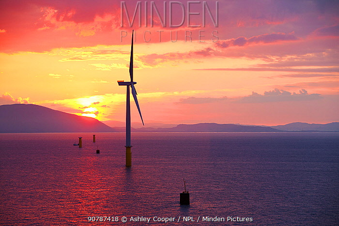 The Walney offshore windfarm at sunrise, Barrow in Furness, Cumbria, UK. July 2011.