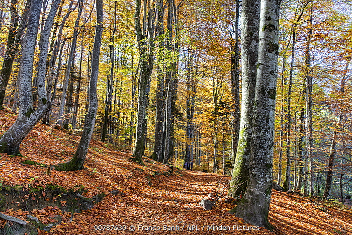 Forest in autumn colours,  Plitvice Lakes National Park, UNESCO World Heritage Site, Central Croatia. Croatia