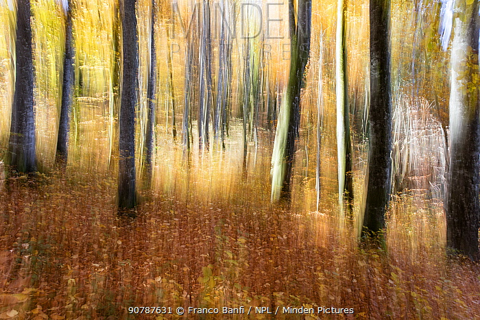 Artistically blurred image of the forest in autumn colours,  Plitvice Lakes National Park, UNESCO World Heritage Site, Central Croatia. Croatia