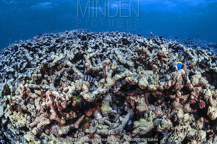Dead coral bleached by warm waters, Denis island, Seychelles Archipelago, Indian Ocean.