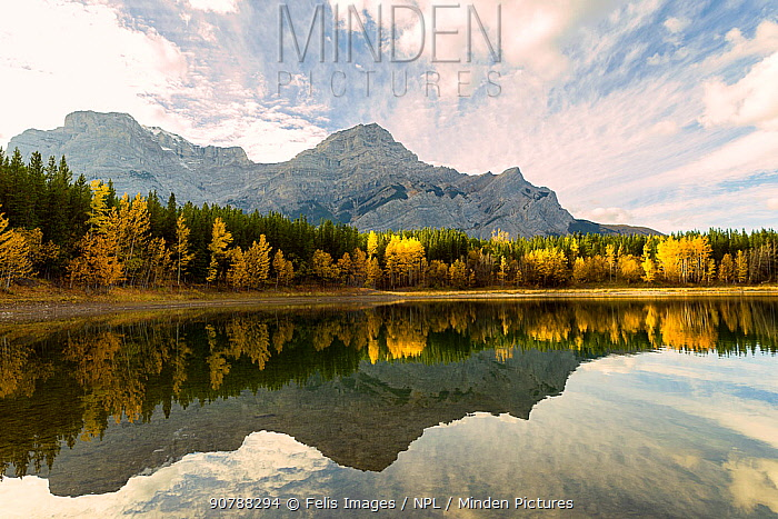 Wedge Pond, in surrounded by autumn trees,  Alberta, Canada. September.
