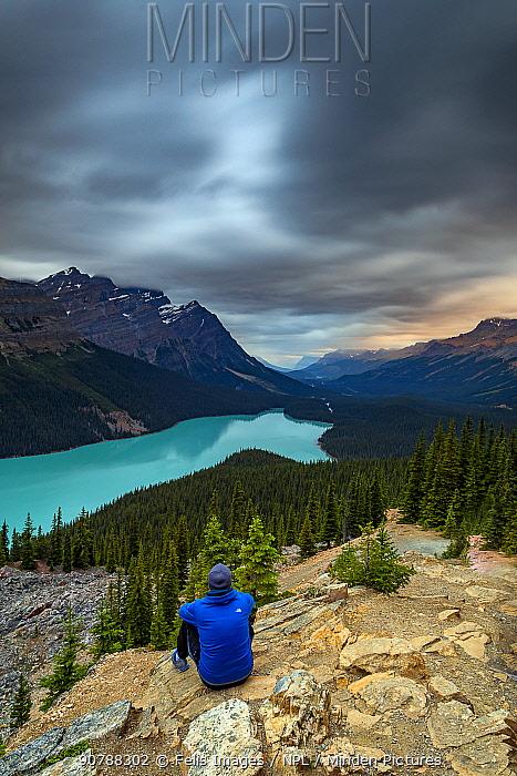 Man looking out over Lake Peyto, Banff National Park, Alberta, Canada.