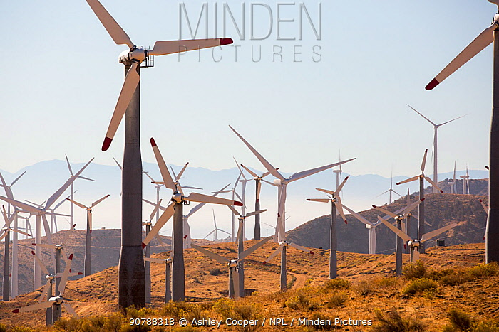 Part of the Tehachapi Pass wind farm, the first large scale wind farm area developed in the US, California, USA. September 2014
