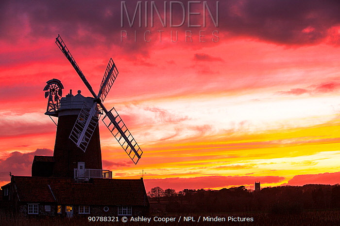 Windmill at Cley Next the Sea with Blakeney church in the background at sunset. North Norfolk, UK, February 2015