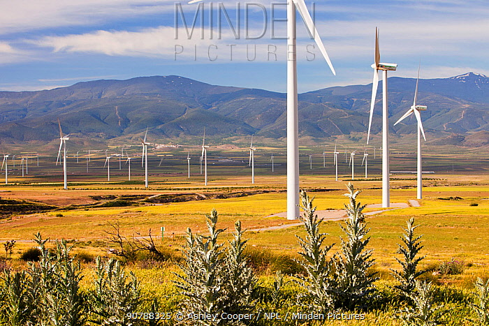 A wind farm near La Calahorra in Andalucia, Spain. May 2011