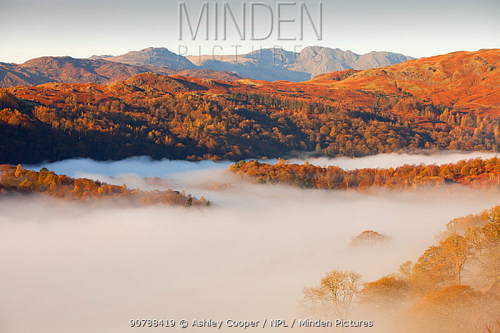 Mist caused by a temperature inversion over Ambleside in the Lake District, England, UK. November 2009