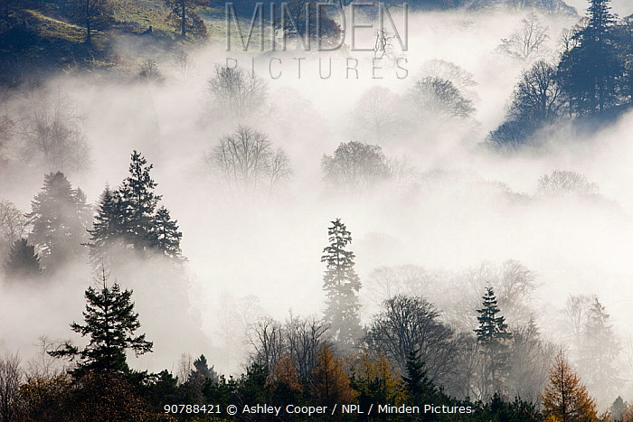 Mist caused by a temperature inversion over woodland near Ambleside,  Lake District, England, UK. November 2009